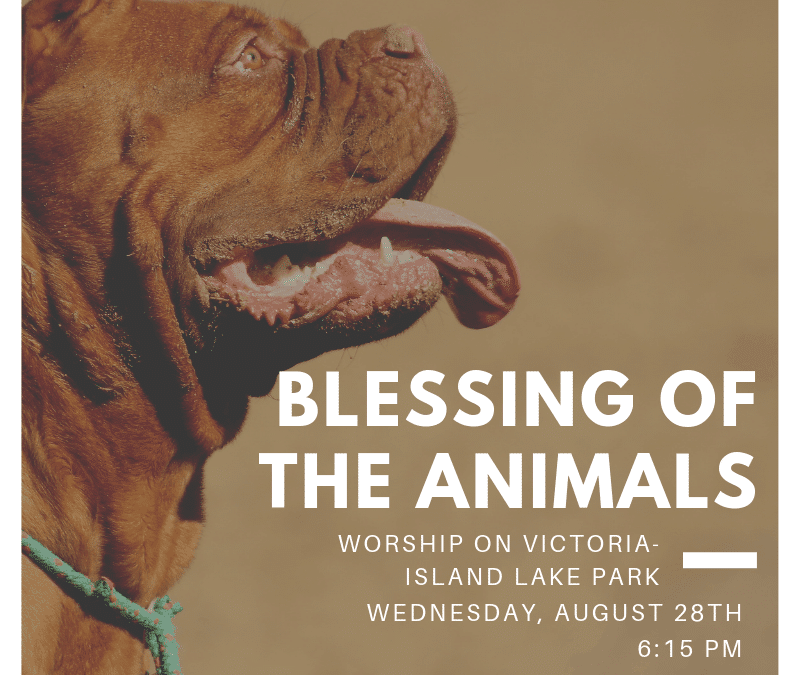 Blessing of the Animals – August 28