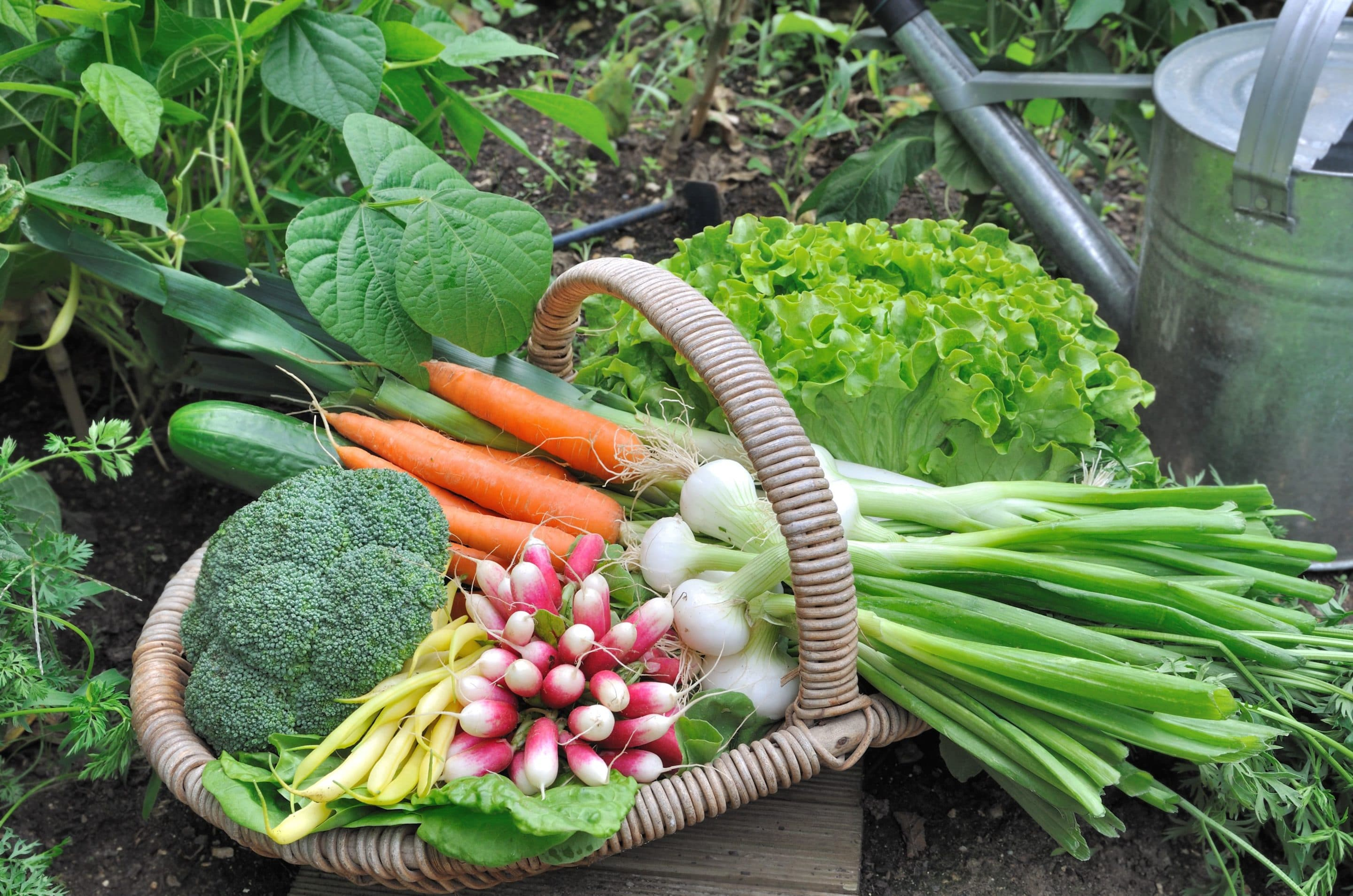 Grow & Give from your Garden